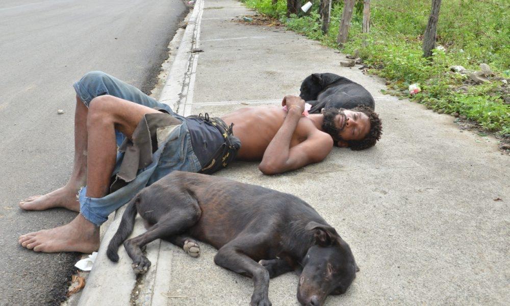 hombre sin casa y sus perros
